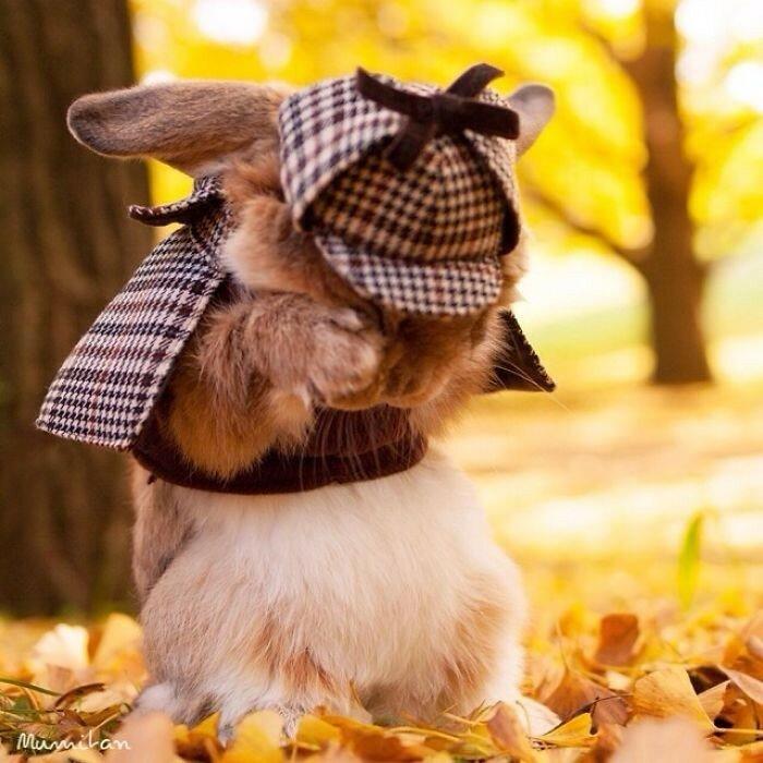 Расстроенный кролик-почтальон