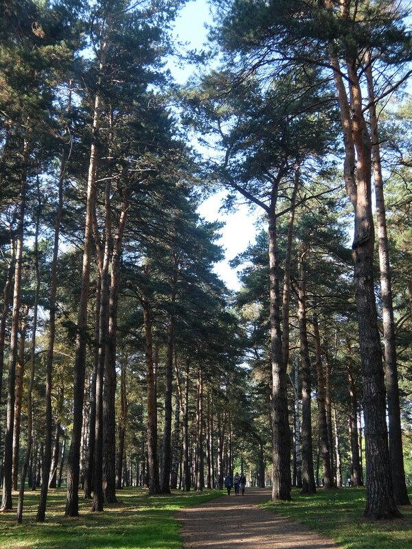 Зенковский парк - Тропинка в лесу