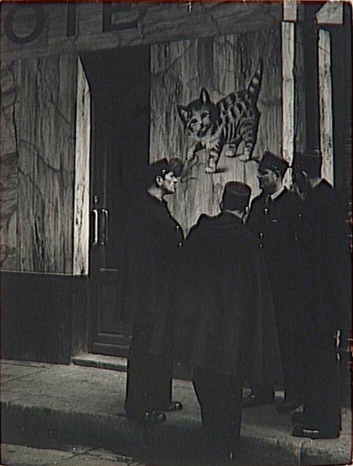 1939. Кошка с клубком