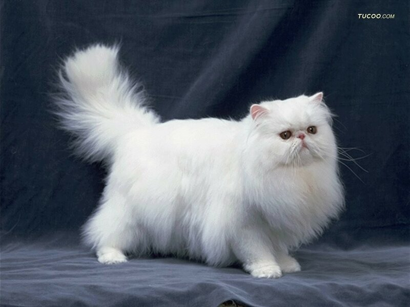 Fluffy  Definition of Fluffy by MerriamWebster