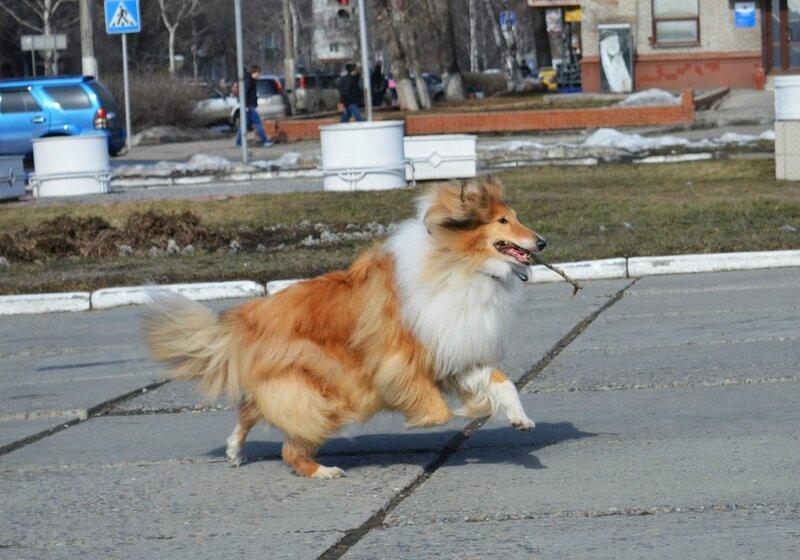 http://img-fotki.yandex.ru/get/5114/134559744.23/0_d0409_73966a8d_XL.jpg