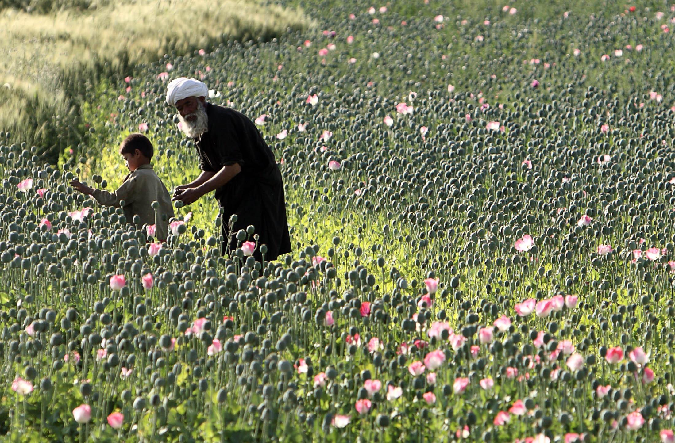 "Картинки по запросу ""Афганистан опиум"""