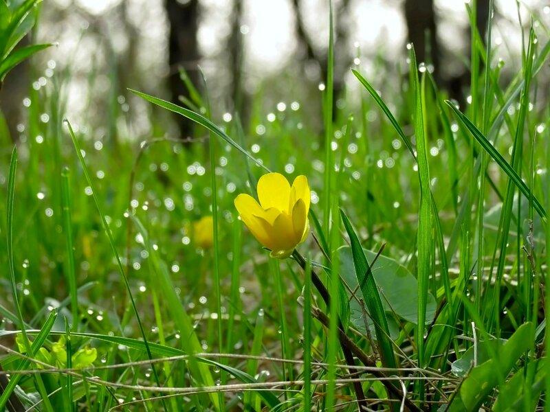 Нежности Весны!