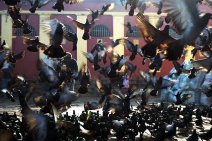 В бельгийском городе из здания мэрии вынесли 10 тонн помета