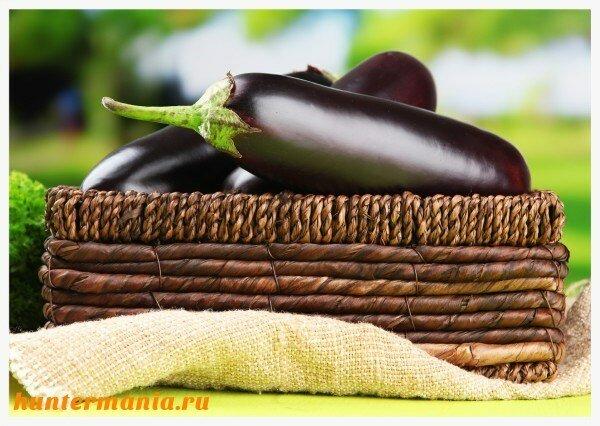 Как выбирать и готовить баклажаны