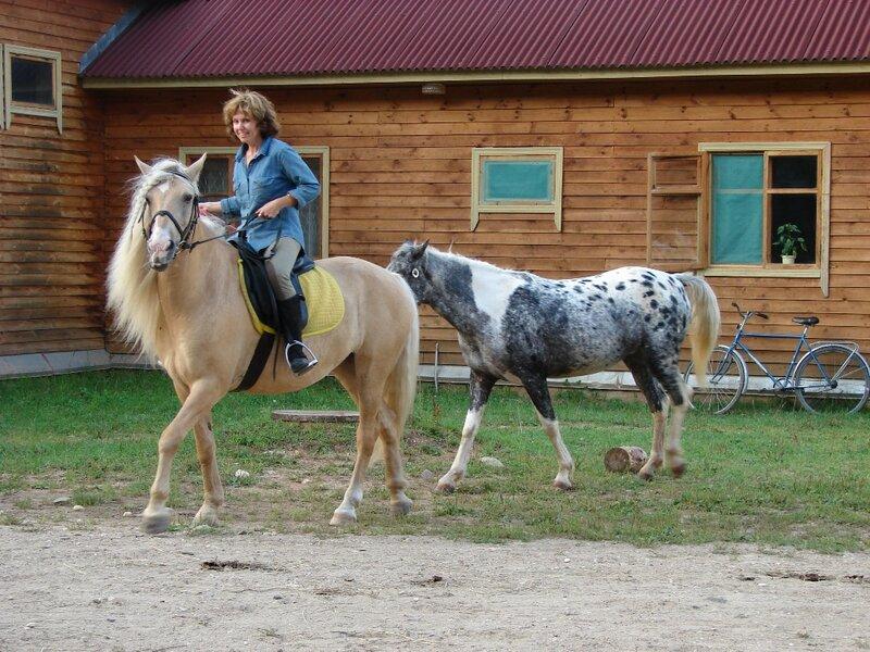 порода лошадей башкирская фото