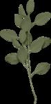 cvd secrets of the heart eucalyptus leaves 2.png