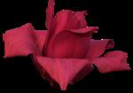 cvd secrets of the heart magnolia +S.png