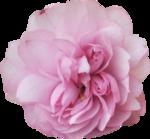 bee_floral_el8.png