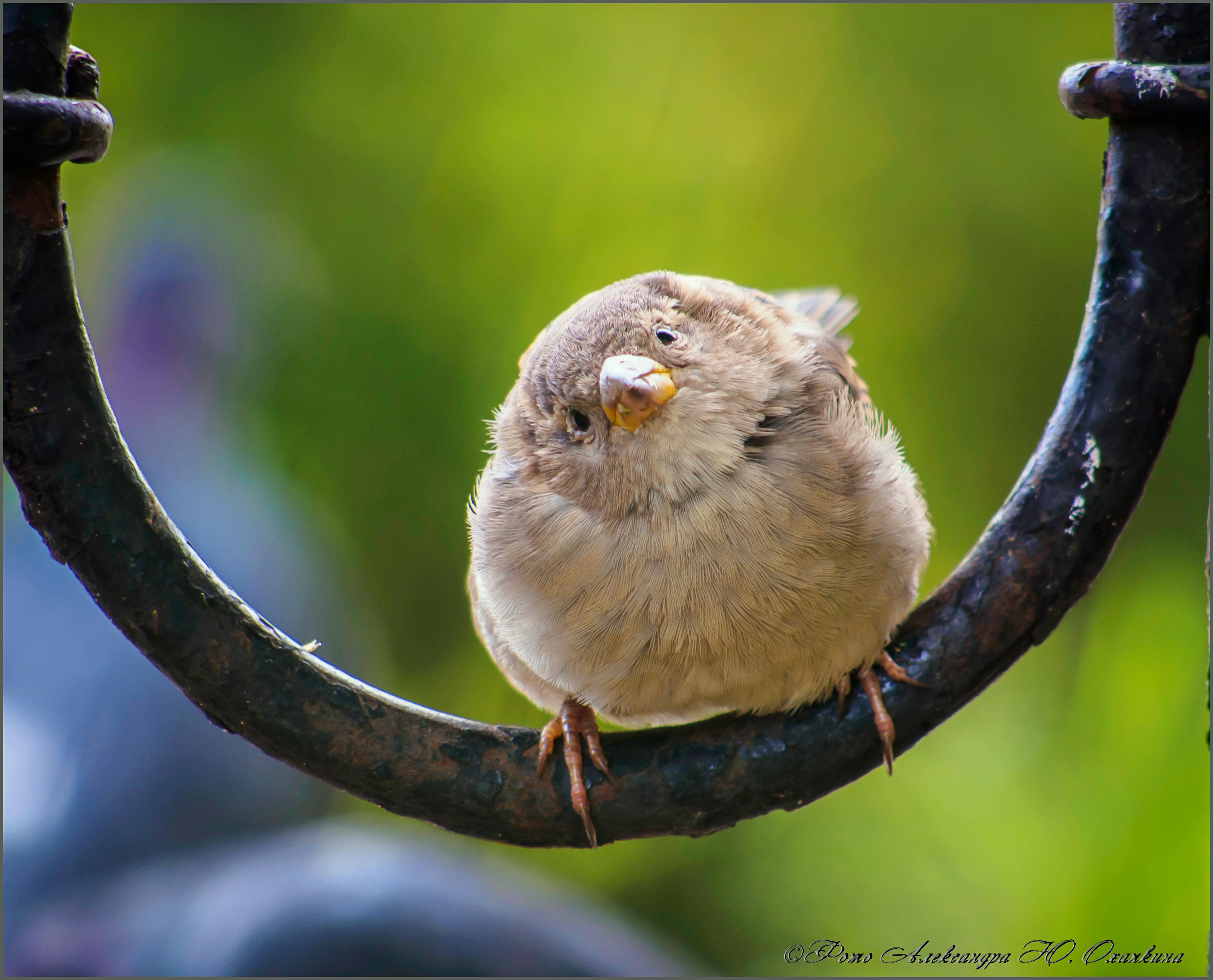 Знакомая птица.