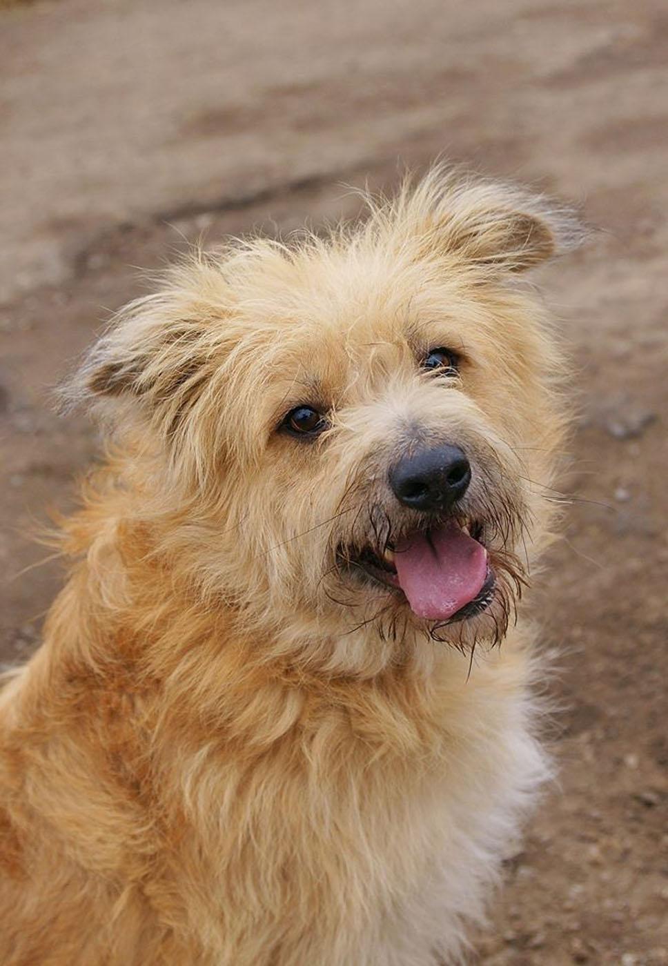 собака Апельсин из приюта догпорт