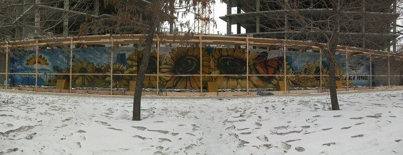 Подсолнухи (20-12-2011)