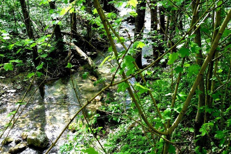 У реки, на тропе ... SAM_7709.JPG