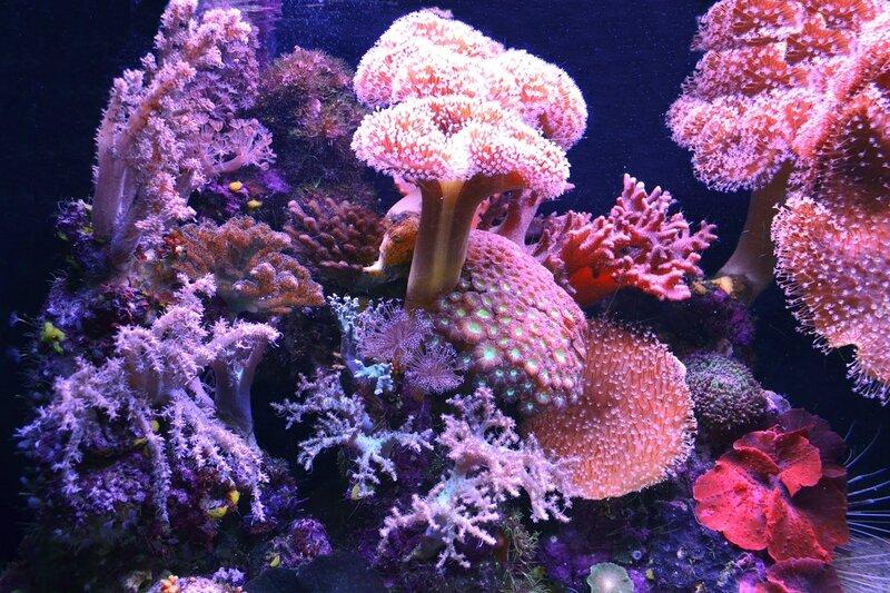 продукт растения атлантического океана фото и названия каждый день можно