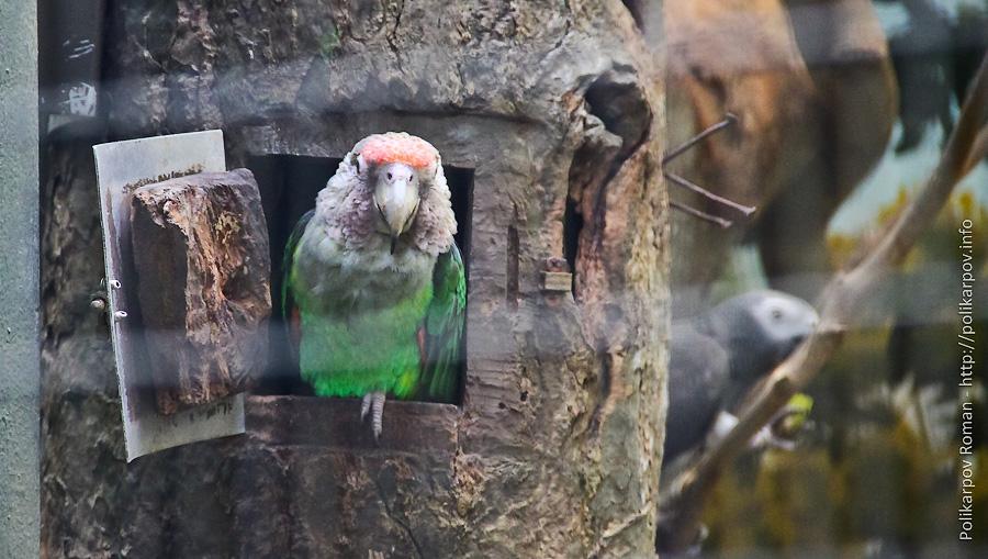 0 c4fb5 1fa45953 orig Парк птиц Jurong в Сингапуре