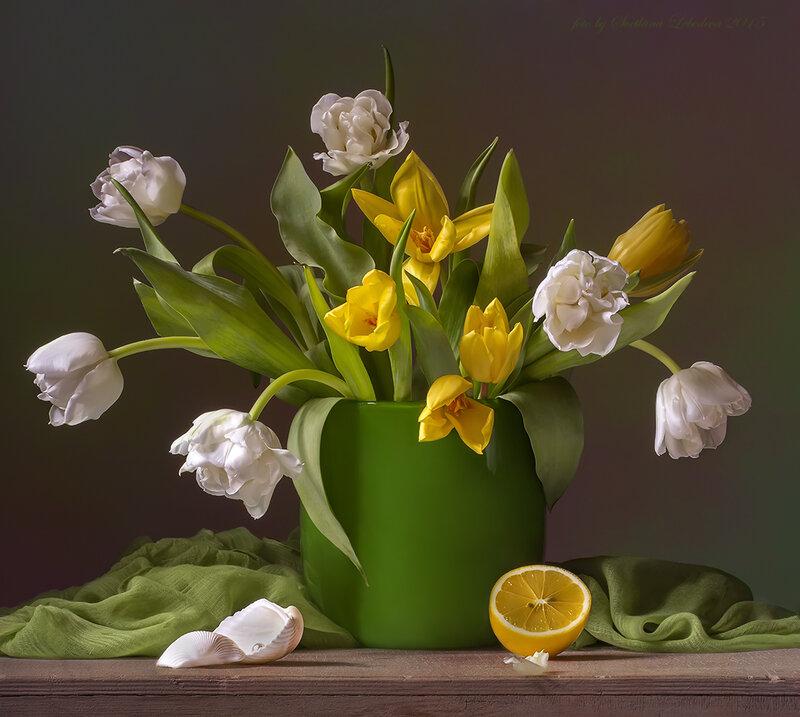 Натюрморт с белыми и жёлтыми тюльпанами