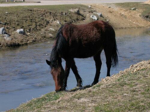 В Бендерах мужчина погиб, пытаясь искупать лошадь