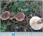 http://img-fotki.yandex.ru/get/51236/161956531.11/0_173cd5_253d64de_orig.png