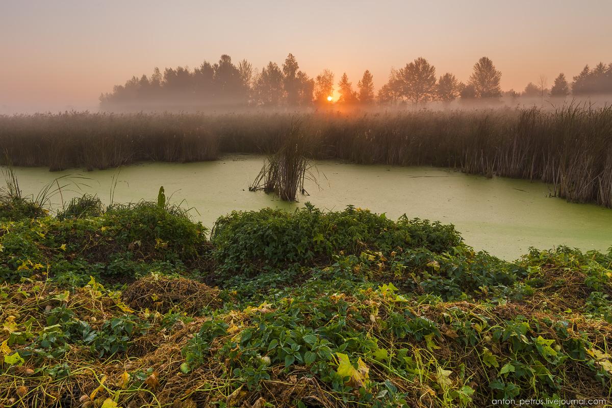 Осенние туманы