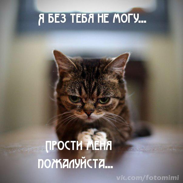Я без тебя не могу! Прости меня, пожалуйста! Раскаянье кота открытки фото рисунки картинки поздравления