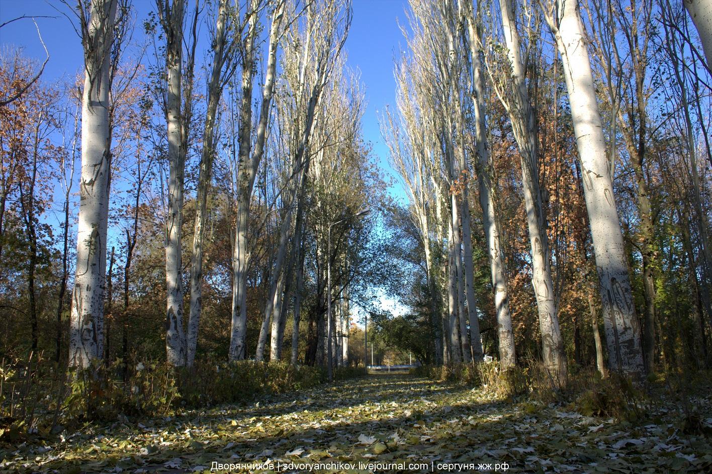 Опавшая зелёная листва - парк вгс - 25 октября 2016