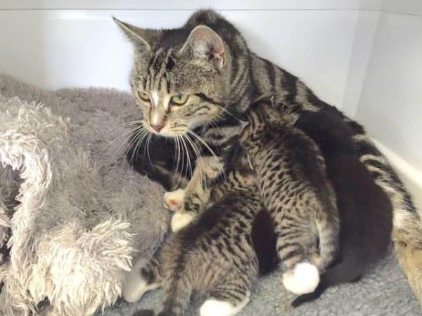 кошка пришла в ветеринарную клинику чтобы вернуть котят
