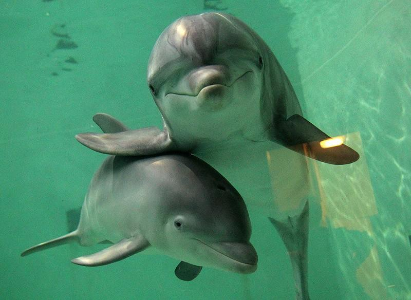 В природе существует почти сорок видов дельфинов, их ближайшие родственники — киты и морские коровы.