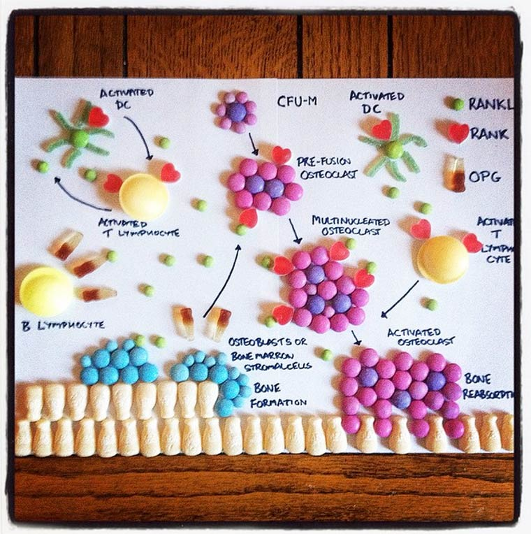 Candy Anatomy - Learning the human anatomy with colorful candies