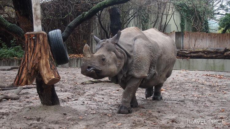 Носорог berlin zoo