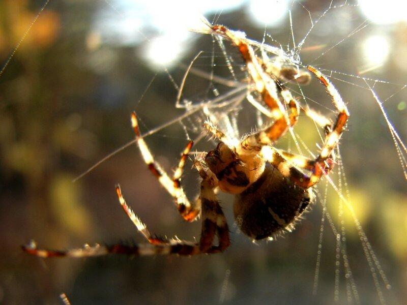У паука 002 ... фотограф Александр Улисский