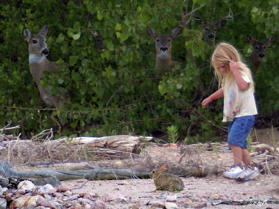 nature-watching-bill-stephens.jpg