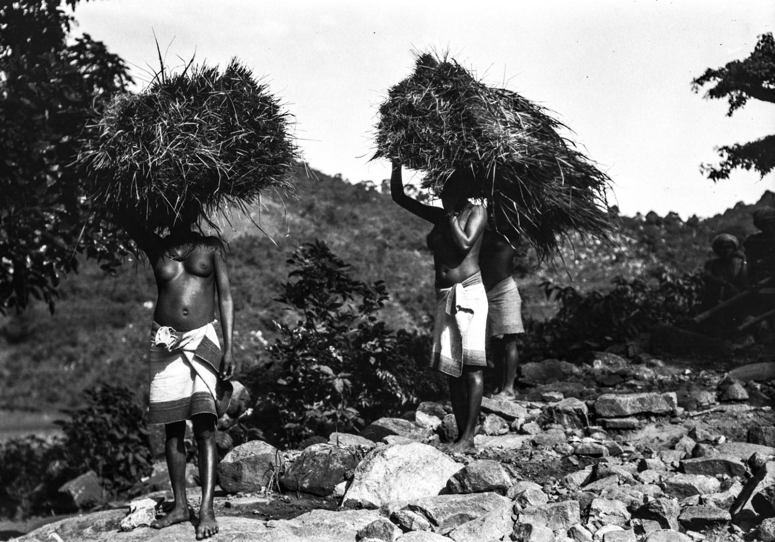 687. Орисса. Женщины с охапками травы