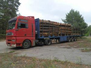 Правосекторівці задержали незаконных вырубщиков леса Полтавщины