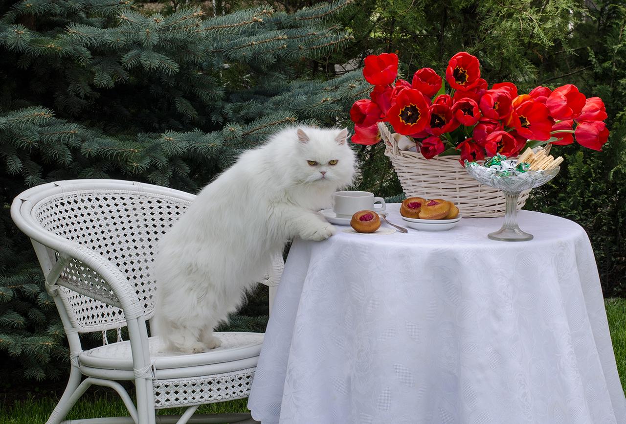 ЗАВТРАК АРИСТОКРАТА.С Днём кошек!!!)