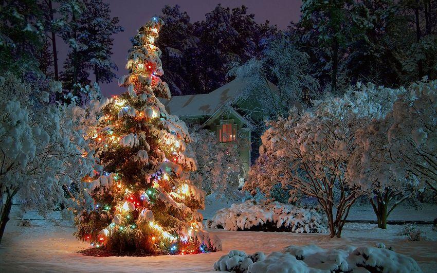 Новый год Новогодняя ёлка Пейзажи
