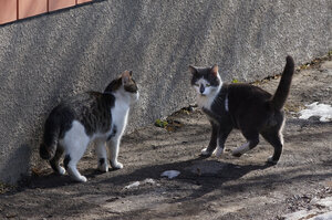 Весенние котики