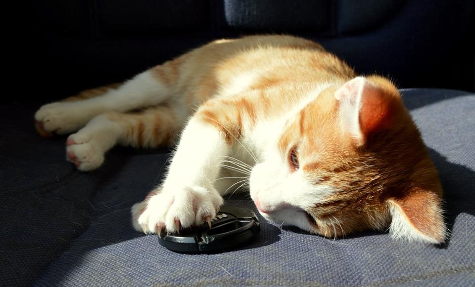 Ярик кот из приюта догпорт