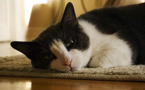 20. Почему коты не любят купаться? На самом деле, большинство котов спокойно относятся к воде и при