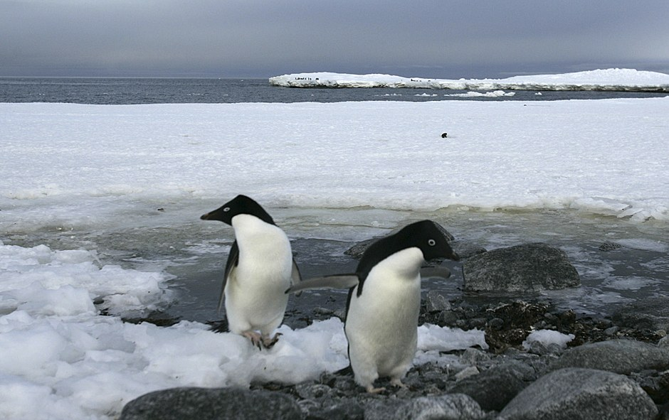 Ледники на острове архипелага Южные Шетландские острова. (Фото Paulo Whitaker | Reuters):