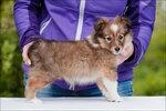 Puppy-Grazel-13.jpg