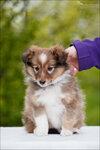 Puppy-Grazel-15.jpg