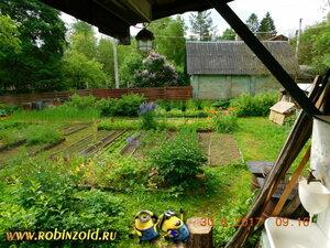 огород конца июня