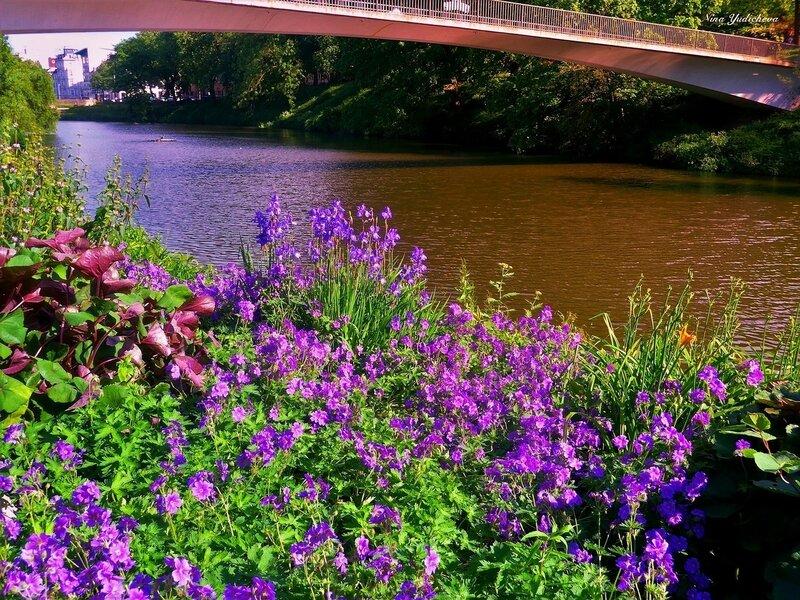 Мост и фиолетовые цветы