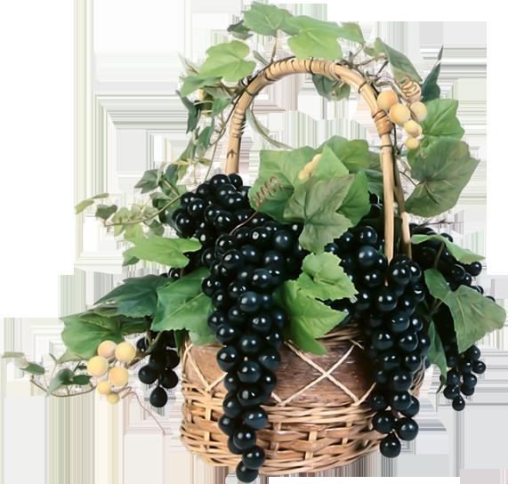 Виноград (1).png