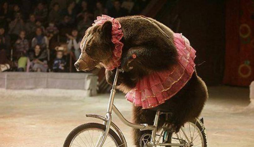 В Киевской области цирковой медведь набросился на зрителей, есть пострадавшие. ВИДЕО 18+