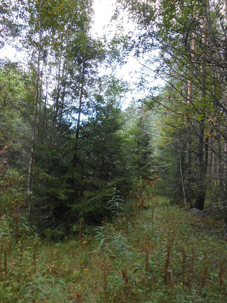 Лес в районе деревни Полосы