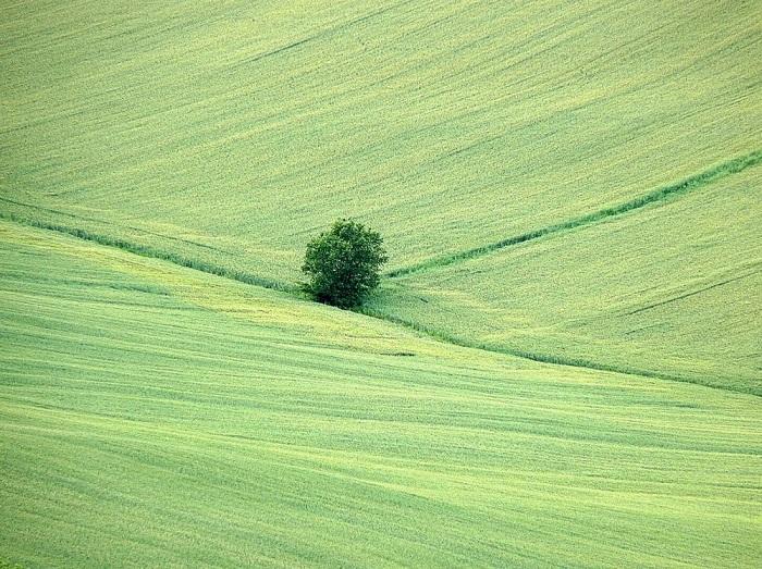 10. Дерево в поле