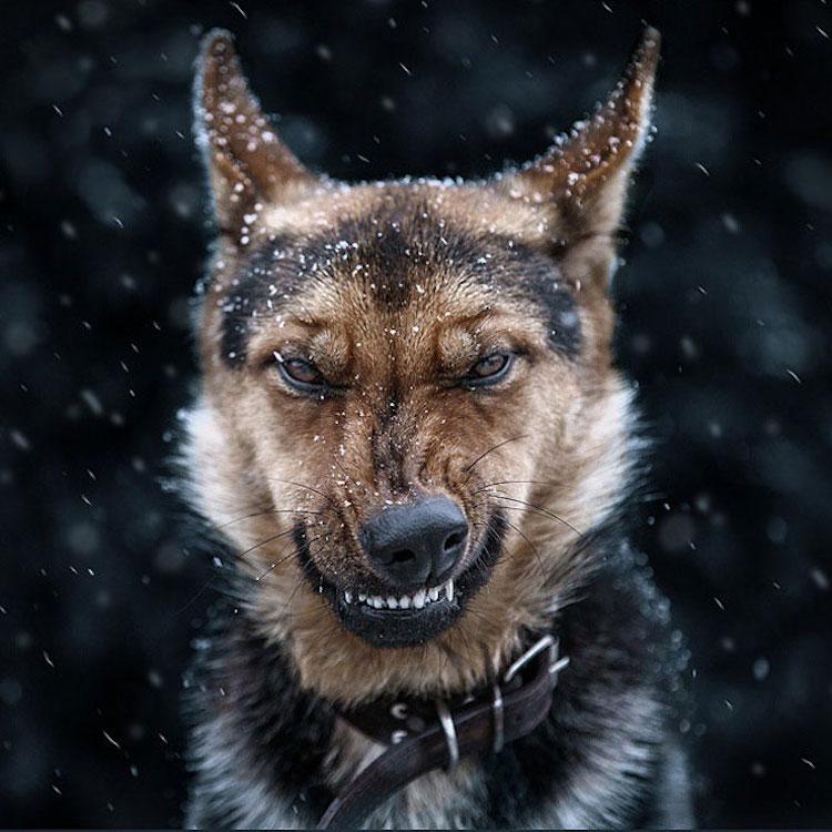 Экспрессивные портреты животных фотографа Сергея Полюшко (14 фото)