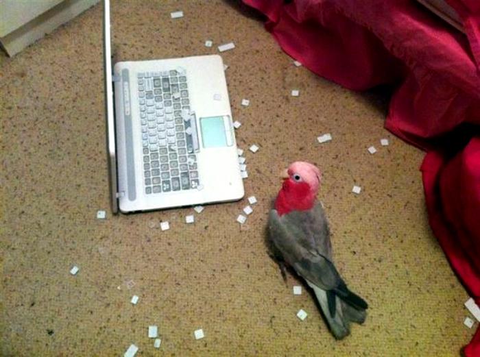 Разобрал клавиатуру. 3.