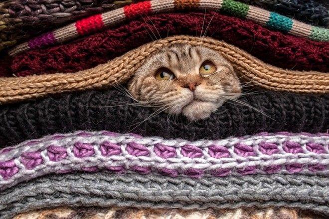 7. Ты докажешь свою доброту. Коты знают, кому можно доверять, и отдают предпочтение только порядочны